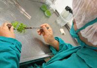 Ciencia villaclareña, pasos certeros en el 2010