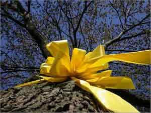 Una cinta amarilla por amor
